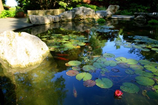 Dallas Arboretum Lily Pads